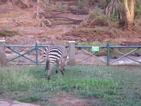 Тсаво, Кения: Vue depuis le restaurant