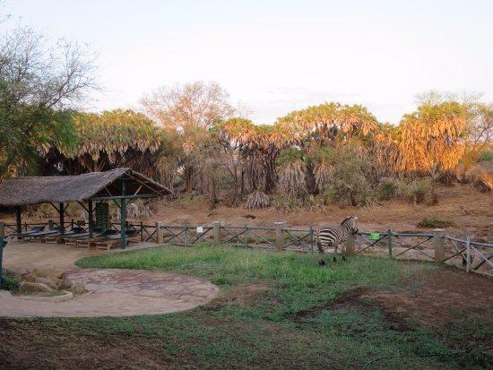Tsavo, Kenia: Vue depuis le restaurant