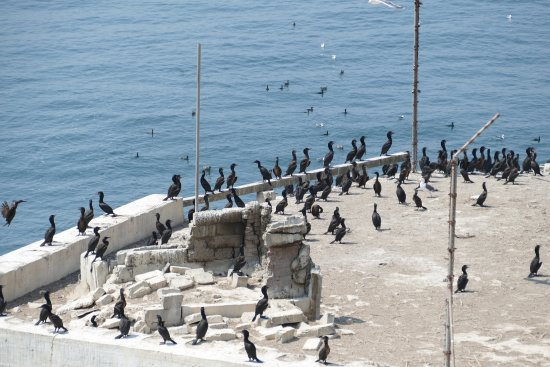 Alcatraz Island: photo0.jpg