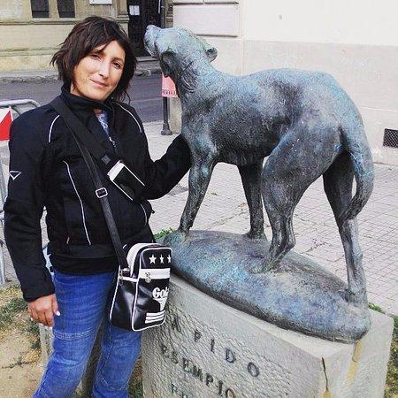 Борго-Сан-Лоренца, Италия: Il buon Fido in attesa del ritorno dell'amato padrone