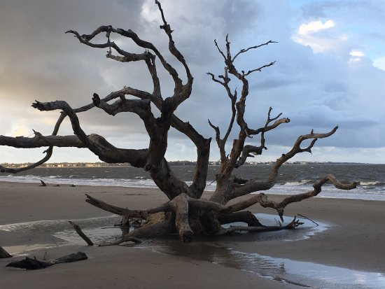Driftwood Beach: photo1.jpg