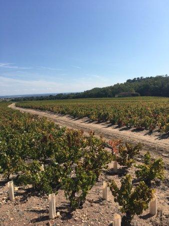 Charentay, فرنسا: Prachtig wijngebied