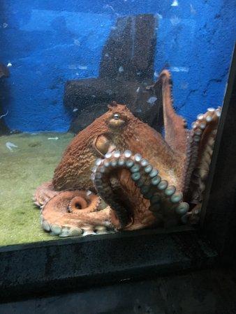 Muroran City Aquarium : photo5.jpg