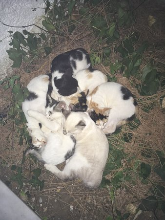 Apollon Hotel Apartments: The kittens outside our apartment sleeping.....Bless