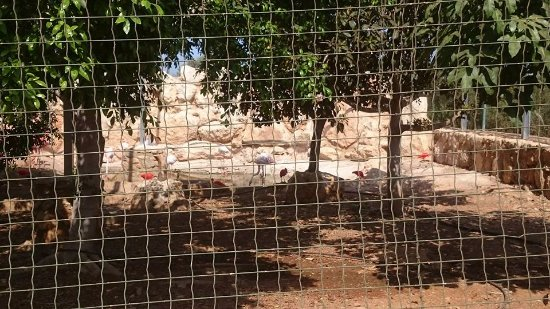 Pafos Zoo: Flamingos