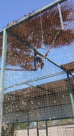 Pafos Zoo: Bird