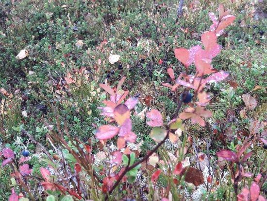 Sarna, Suède : Vackra höstfärger i Fjätervålen