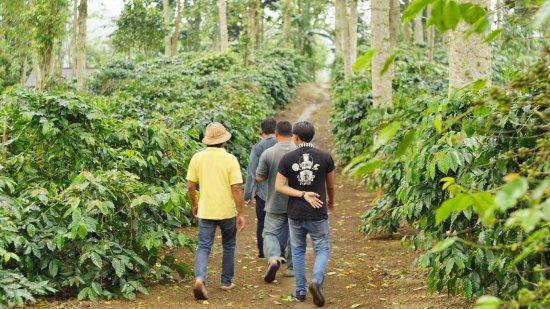 The Koop Roaster & Cafe: Farm visit, Petang