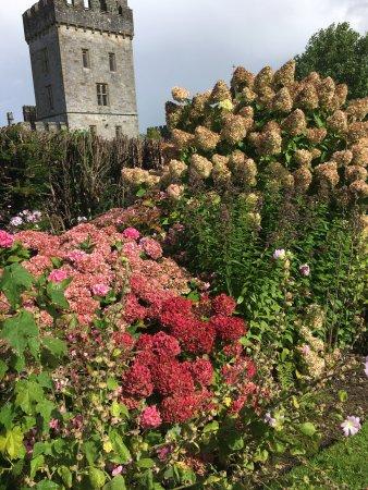 Lismore, İrlanda: photo2.jpg