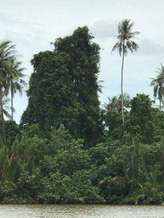 Kuala Terengganu, Malesia: photo9.jpg