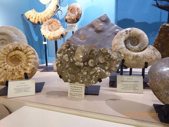 Hill City, Güney Dakota: Ammonites