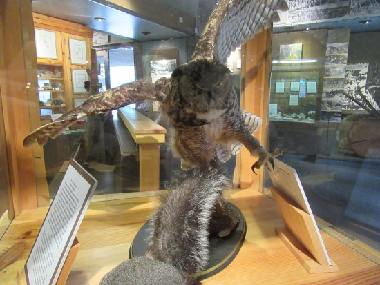Idyllwild Nature Center: Nature center exhibit
