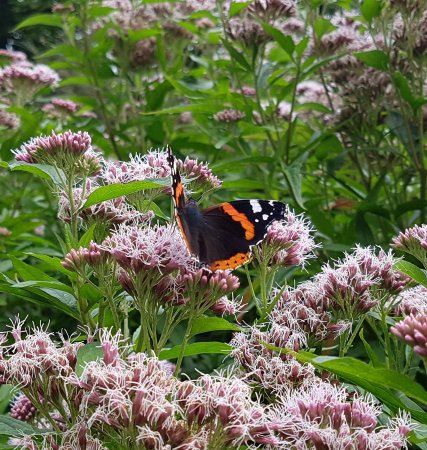 Butterflies picture of mellerstain house gardens - Dow gardens butterfly house 2017 ...