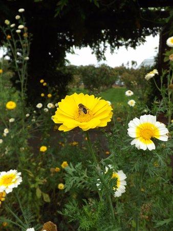 Knutsford, UK: Tatton Park, kitchen garden.