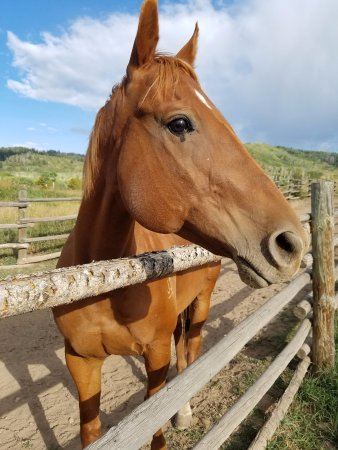 Clark, CO: Hello from The Home Ranch