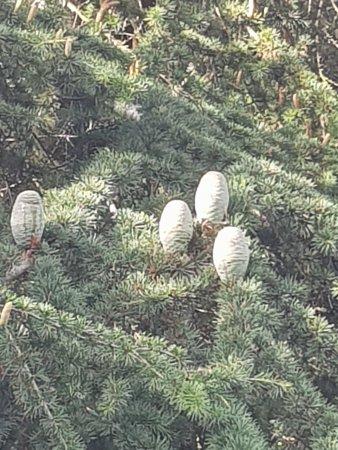 Aylesford, UK: Cones