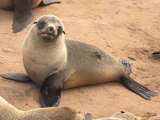 Cape Cross : photo2.jpg