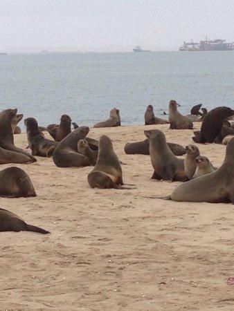 Walvis Bay, Namibia: photo0.jpg