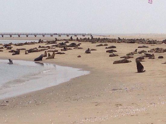Walvis Bay, Namibia: photo3.jpg