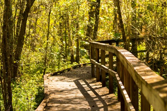 Bowling Green, FL: Excellent trails