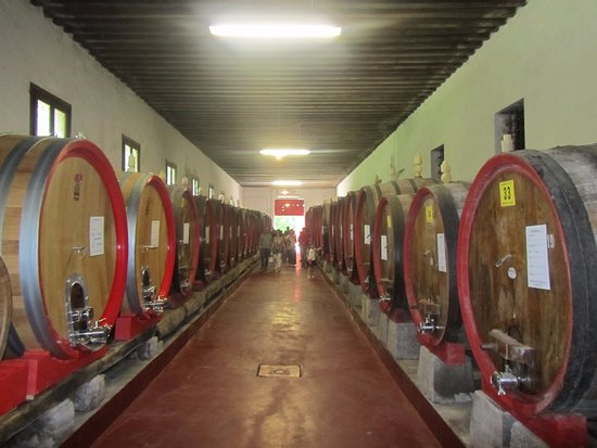 Oderzo, İtalya: Le botti nella cantina