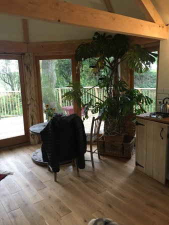 Bromyard, UK: A beautiful night away in Humboldt tree cabin ❤️