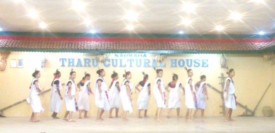 Sauraha, Nepal: Tharu Performance