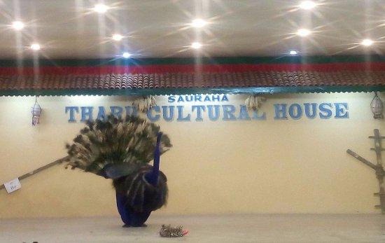 Sauraha, Nepal: Peacock Dance