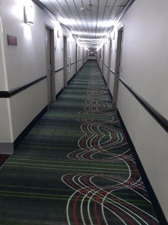 Elyria, OH: hall carpet design, took some getting used to, but clean