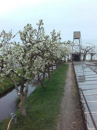 Honselersdijk