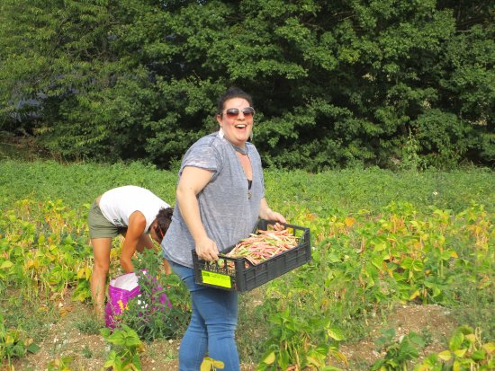 Montefalco, Italien: Picking beans in the field