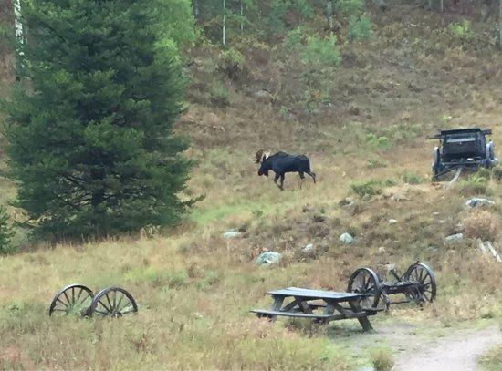 Piney River Ranch: photo2.jpg