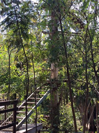 Gold Coast, Australia: Tree Top Challenge