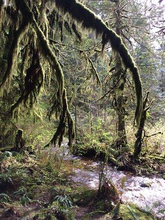 Roberts Creek, Canadá: Trails at CGP