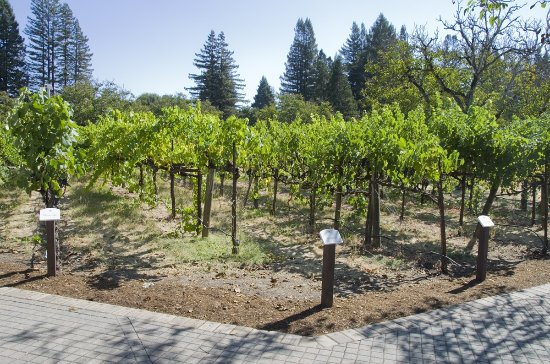 Fulton, CA: The demonstration garden features almost every variety of wine grape.