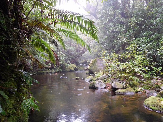 New Plymouth, New Zealand: One of the many mountain streams that run through Pukeiti.