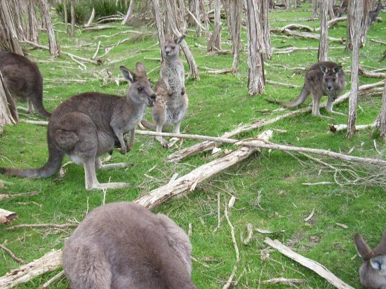 Bayles Fauna Reserve
