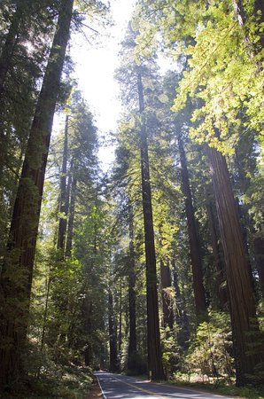 Avenue of the Giants: The soaring giants simply take your breath away.