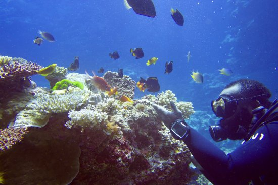 Mai Dive - Astrolabe Reef Resort: Fish and Dive master