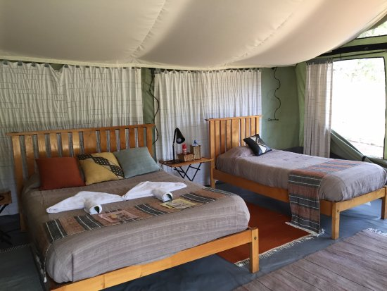 Porini Lion Camp Photo