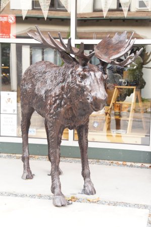 The Chocolate Moose: Close up of Chocolate Moose's Moose statue