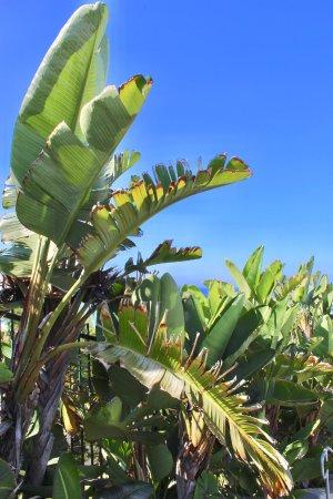 Dana Point, CA: beautiful foliage along the way