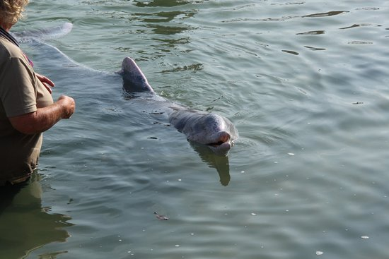 Barnacles Dolphin Centre (Tin Can Bay, Australia): Top ...