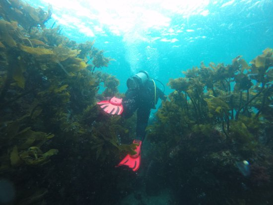 Leigh, New Zealand: Underwater Realm