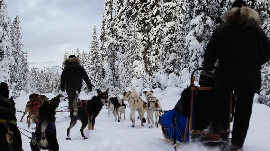 Lake Louise Inn Dog Sledding