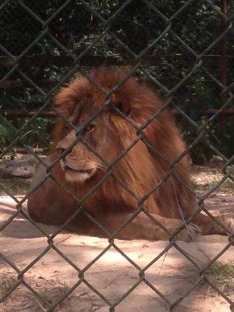 Broussard, LA: Lo q más me gusto de ir al zoo es q los animales están más serca y los puedes disfrutar mejor y