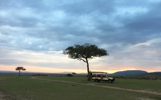 Mara Bushtops & Spa Village : Watch sunrise during early morning safari