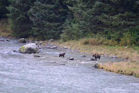 Chilkoot Haven: Momma and baby eating breakfast on the opposite bank of the river. Best view is at sunrise.