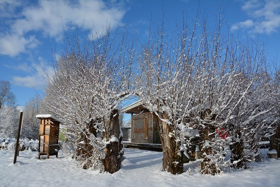 Moenchaltdorf, Switzerland: Naturstation Silberweide Winter