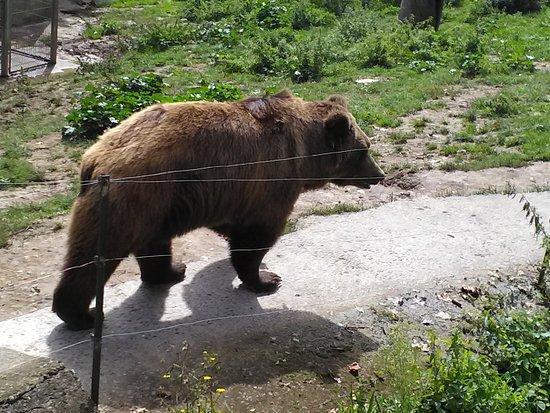Karpin Abentura: el oso impone